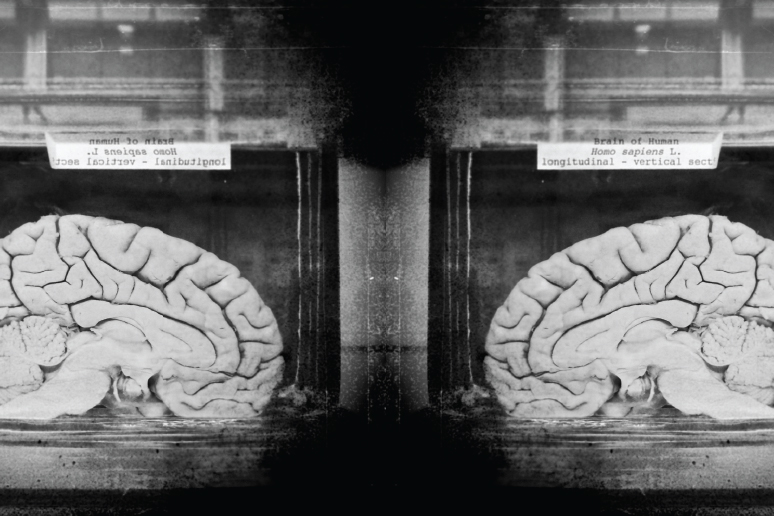Neglecting Neuroscience Has Criminal >> Your Brain On Law How Neuroscience Is Changing The Criminal Justice
