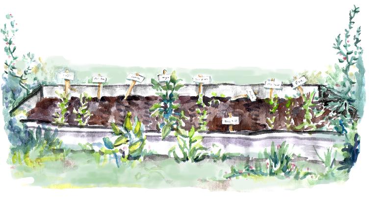 Vegetable Research Farm #3