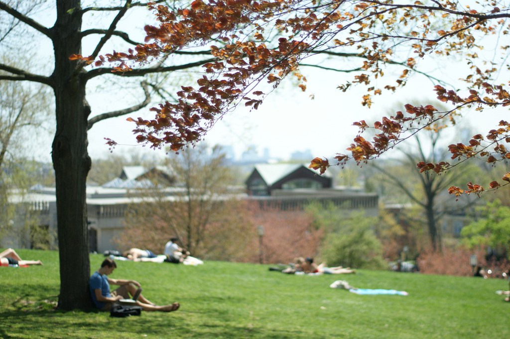 Tufts in Spring